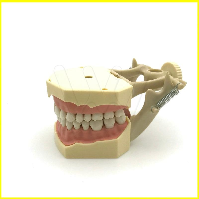 Dental Soft Gum Teeth Model with tougneTypodont w/ 32 Removable TeethDental Soft Gum Teeth Model with tougneTypodont w/ 32 Removable Teeth