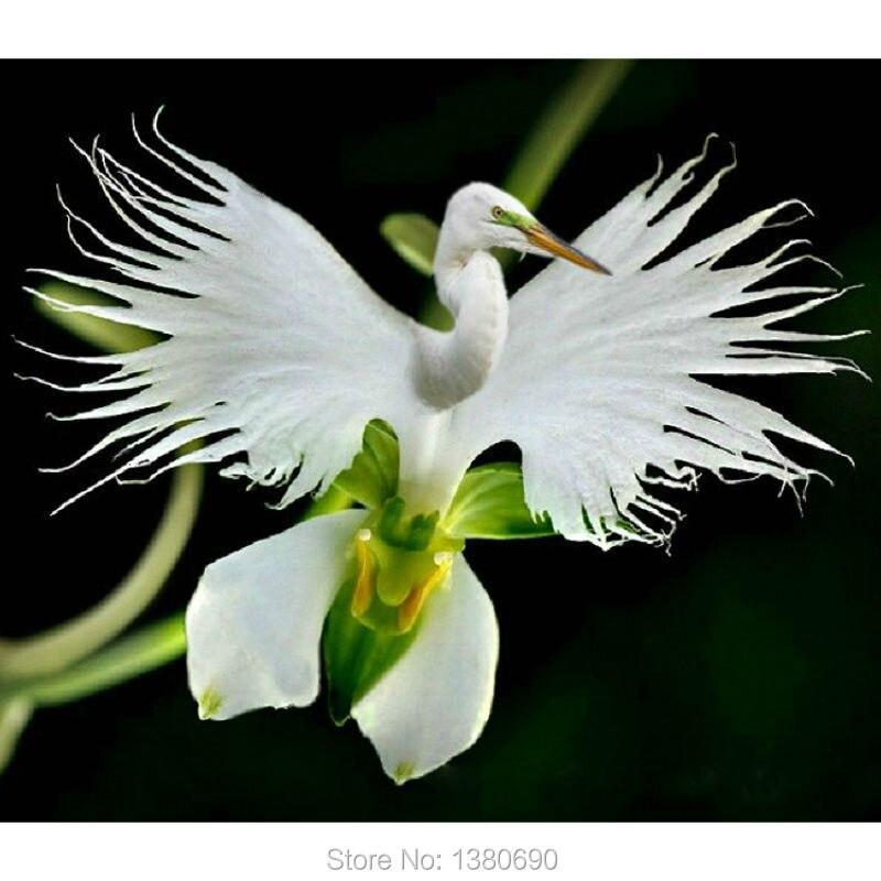 achetez en gros graines orchid e en ligne des grossistes graines orchid e chinois aliexpress. Black Bedroom Furniture Sets. Home Design Ideas