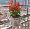 Iron Pot Trays Balcony Flower Box Flower Railings Guardrail Hanger Hanging Basket Green Nacelle