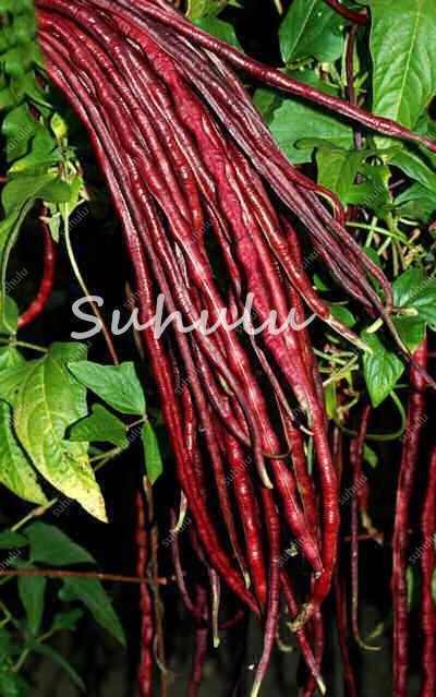 30 Pcs Chinese Vigna Unguiculata Bonsai,Green Long Bean Plantas,Delicious Vegetables Plant For Home And Garden Easy Grow