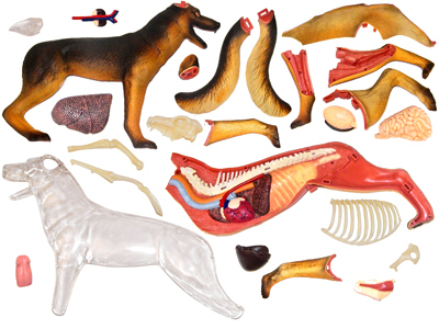 4d Vision puzzle modell Anatomie der Tiere Hunde hund in 4d Vision ...