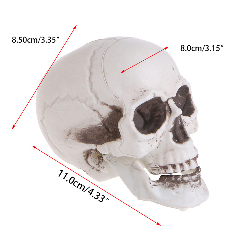 SkullDecorPropSkeletonHeadPlasticHalloweenDayCoffeeBarsOrnament