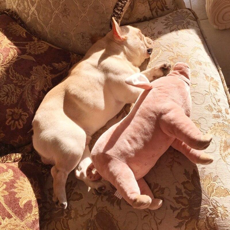 2016 Brinquedos Dogs Chien Method Of Bucket Four Feet Pig Sleeping Partner French Bulldog Toy Dog Pet Plush Toys Free Shipping