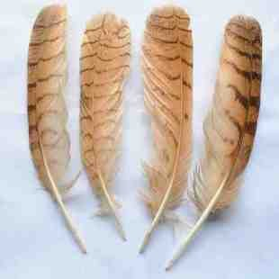 30pcs Lot 20 25cm Nature Colour Owl Feathers Eagle Feathers Great Horned Tail Feathers