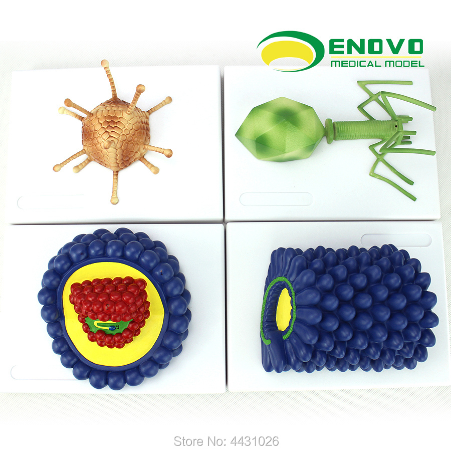 ENOVO Microbiology virus model baculovirus adenovirus phage virus HIV virology недорго, оригинальная цена