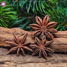 10gram Star Anise Tree Seeds Fennel Branch Chinese Kitchen Cooking Seasoning Spices Illicium Verum Hook Herbal Medicine Value