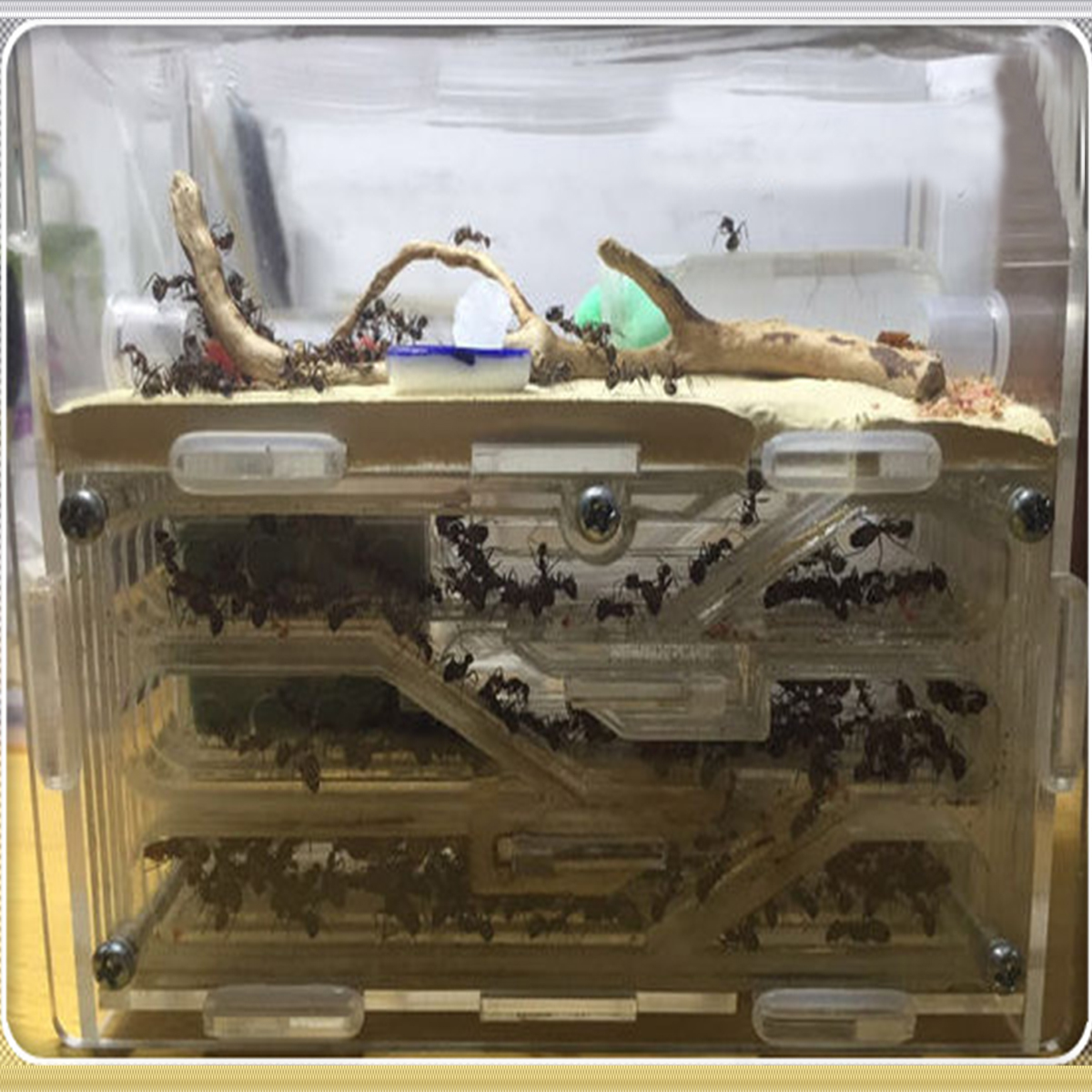 150mmx54mmx110mm Big DIY Moisture With Feeding Area Ant Nest Ant Farm Acrylic Insect Ant Nests Villa
