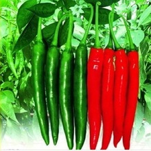 Direct Selling Promotion Outdoor Phoenix 200 Seeds Organic Beauty Pepper  Seeds Vegetable
