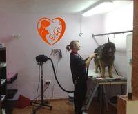 2015 New Arrival Animals Vinyl Wall Vinyl Decal Dog Cat Grooming Salon Pet Shop Store Hospital Housewares Mural Wall Decoration