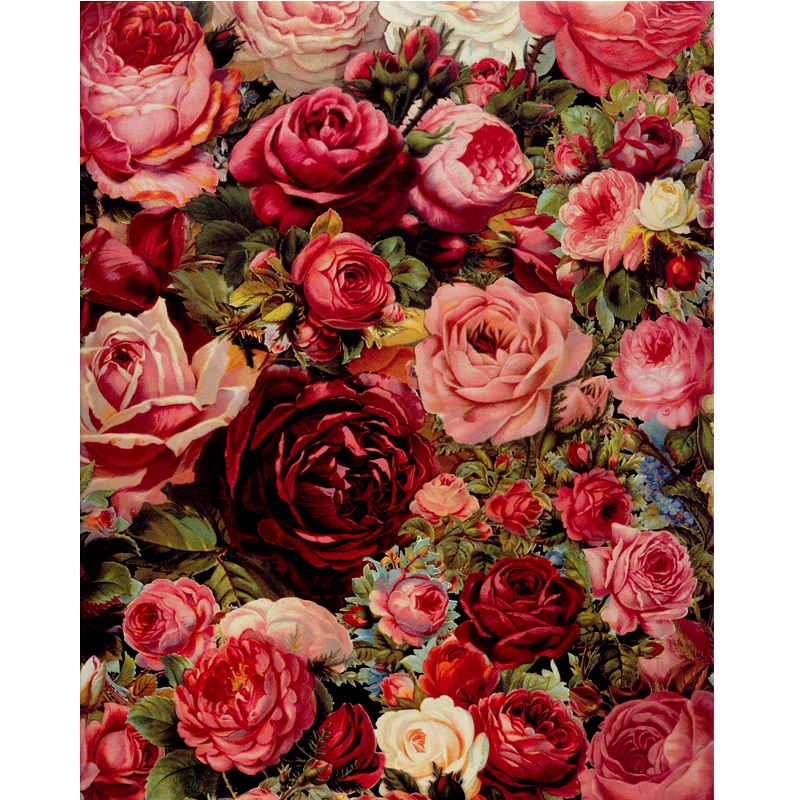 Rose Oil Painting By Numbers Diy Digital Painting Acrylic
