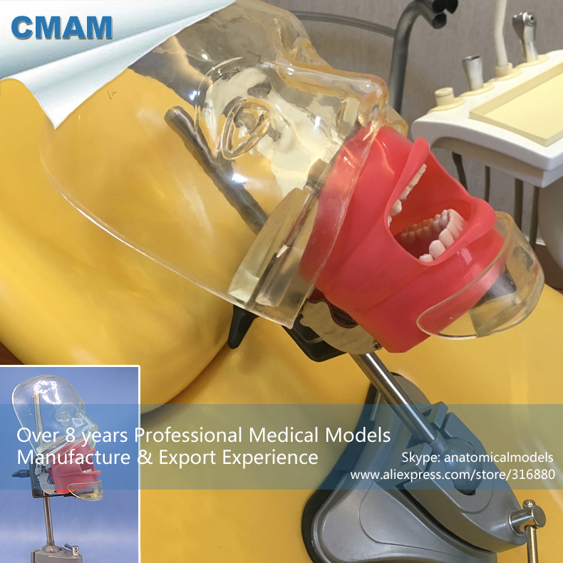 12559 CMAM-DENTAL02 Teaching Simulator Unit Simple Dental Phantom Head, Dental Simulator Unit Teaching Head teaching teenagers
