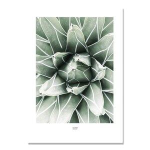 Image 4 - Настенная картина с изображением кактуса, холст для гостиной, искусственные зеленые растения, настенные картины без рамы
