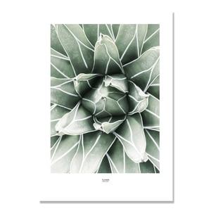 Image 4 - Kaktus obraz ścienny na płótnie do salonu nordycki plakat dekoracja zielona ściana roślin zdjęcia Unframed