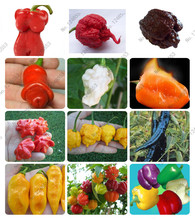 "24 kinds 200 vegetable fruit pepper seeds, Giant chili seeds + sweet pepper + Carolina Reaper"" + hot chilli bonsai plant potted"