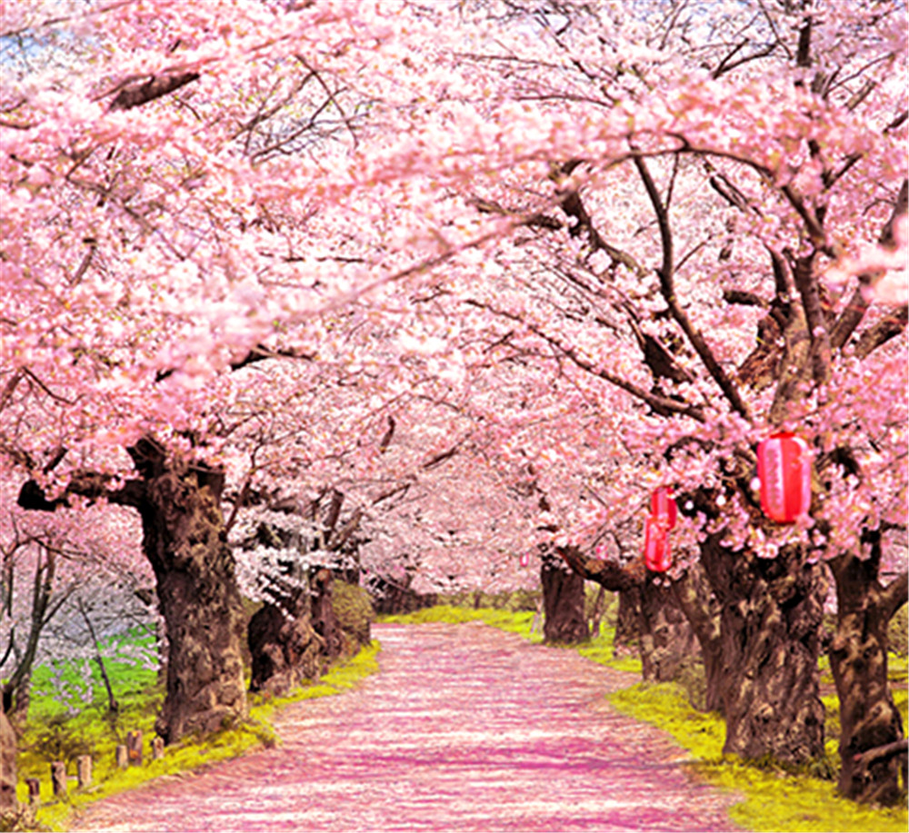 Online Shop Peach Blossom Trees Pink Flowers Road Photography