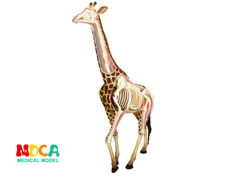 Giraffe 4d master puzzle Assembling toy Animal Biology organ anatomical model medical teaching model giraffe animal series many chew toy pet