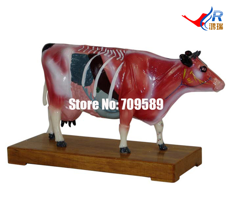Cattle Acupuncture Model, Animal Acupuncture Model dog acupuncture model animal acupuncture model