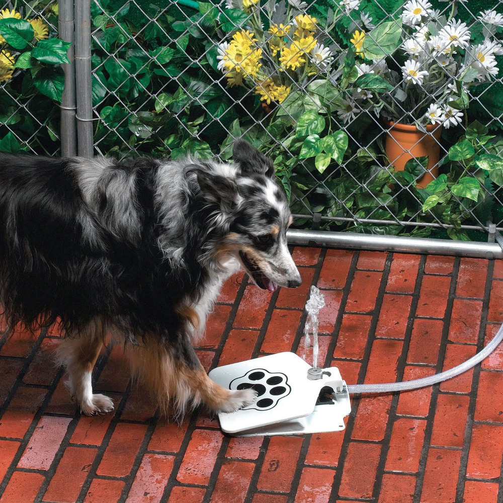 Unusual Aliexpresscom  Buy Dog Automatic Feeders Doggie Drinking  With Exquisite Aliexpresscom  Buy Dog Automatic Feeders Doggie Drinking Fountain Styles  As Pawcet For Dogs Pet Drink Water Hose To Outdoor Garden Paw Toys From  Reliable  With Easy On The Eye Pacha Of London Jewellers Hatton Garden Also Penn Station To Garden City In Addition Robins Nesting In My Garden And Penrose Water Gardens As Well As Steel Garden Shed Additionally Garden Centre Luton From Aliexpresscom With   Exquisite Aliexpresscom  Buy Dog Automatic Feeders Doggie Drinking  With Easy On The Eye Aliexpresscom  Buy Dog Automatic Feeders Doggie Drinking Fountain Styles  As Pawcet For Dogs Pet Drink Water Hose To Outdoor Garden Paw Toys From  Reliable  And Unusual Pacha Of London Jewellers Hatton Garden Also Penn Station To Garden City In Addition Robins Nesting In My Garden From Aliexpresscom