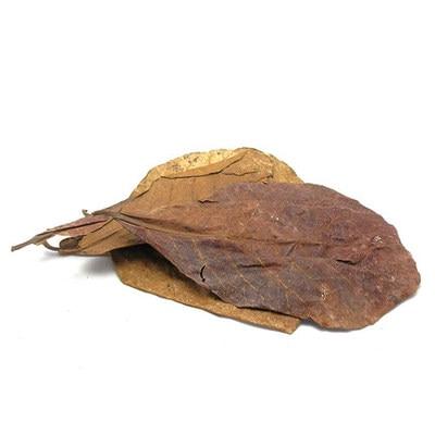 Kết quả hình ảnh cho almond leaves aquarium