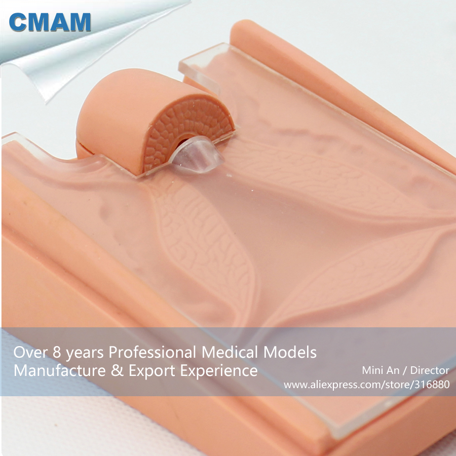 CMAM-ANATOMY07 Medical Science Contraceptive Guidance Model for School cmam anatomy07 reproduction model of intrauterine contraceptive guidance medical science educational teaching anatomical models