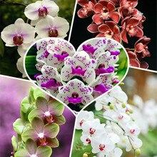 300 Pcs Rare Climbing Cymbidium Orchid Bonsai Mixed Butterfly Phalaenopsis Flower Ornamental Plants Garden Balcony Pot