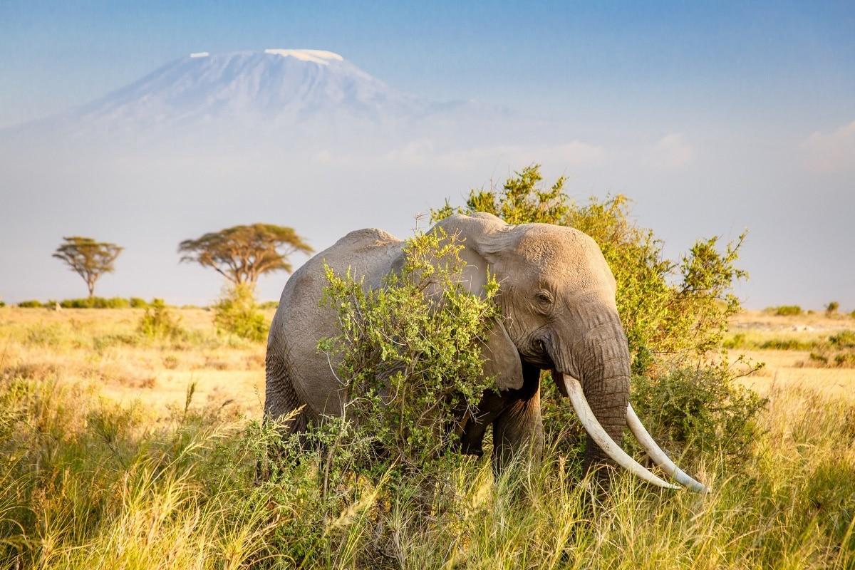 mountain Africa savannah animal elephant MB43 Living room home wall ...