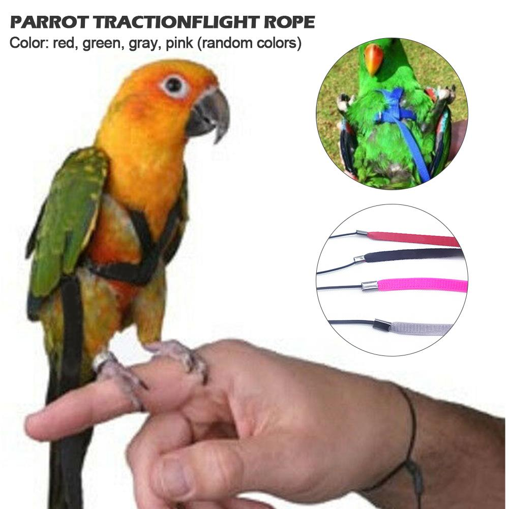 Parrot Release Anti-bite Traction Strap Out Training Traction Rope Gray Parrot Diamond Flight Rope Pet Supplies Color Random