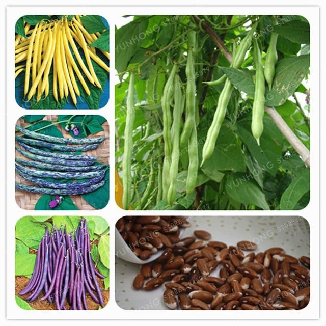 20 pçs/saco Feijão Feijão Phaseolus Vulgaris Planta Verde Bonsai Bonsai Bonsai Vegetal Crescimento Natural Da Planta Para O Jardim de Casa