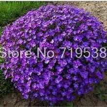 28f1beddf1 Toptan Satış queen violet Galerisi - Düşük Fiyattan satın alın queen ...
