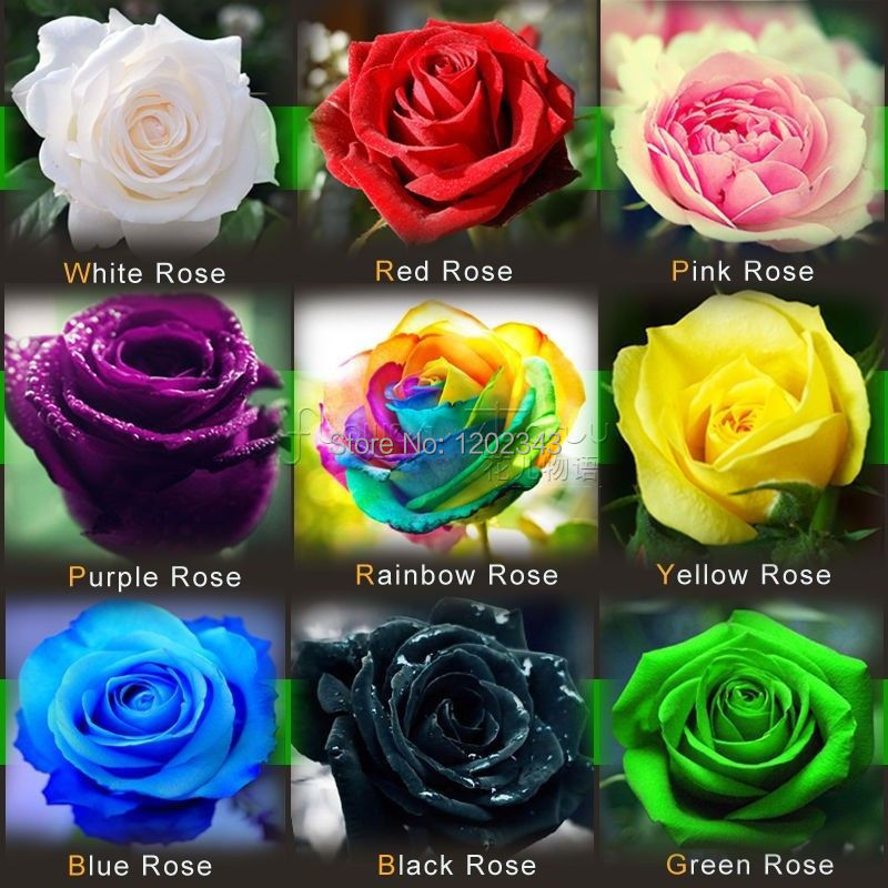Hot Sale Promotion Very Easy Dishes Seeds Vegetables free Shipping 9 Kinds of Hybrid Seeds of Roses Rainbow Seed 270 Piece