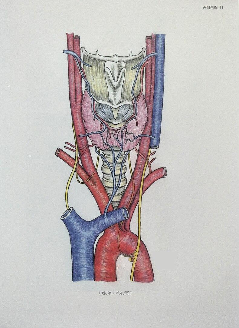 US $15 83 OFF Lengkap Anatomi Manusia Buku Mewarnai Otot Tubuh Anatomi Gambar Garis Pesan Dan Fisiologi Dengan Gambar