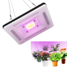 Square Flower 50W Greenhouse