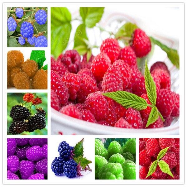 100pcs Raspberry plants Mixed Colors Super Big Raspberry Fruit plants Rare Wild Strawberry Tree plants Flowers Bonsai For Garden