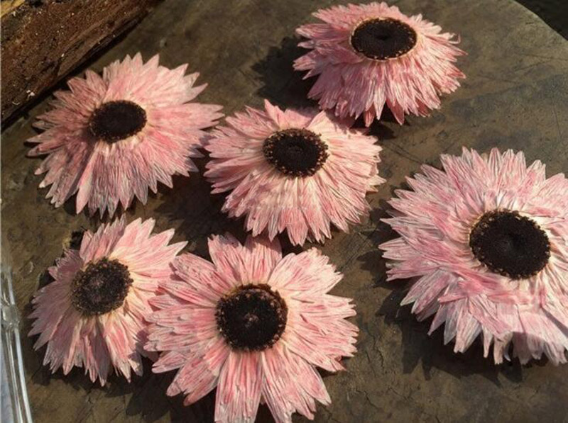 60pcs Pressed Dried Pink Helipterum Flower Plant Herbarium For Jewelry Pendant Ring Earrings Making Accessories