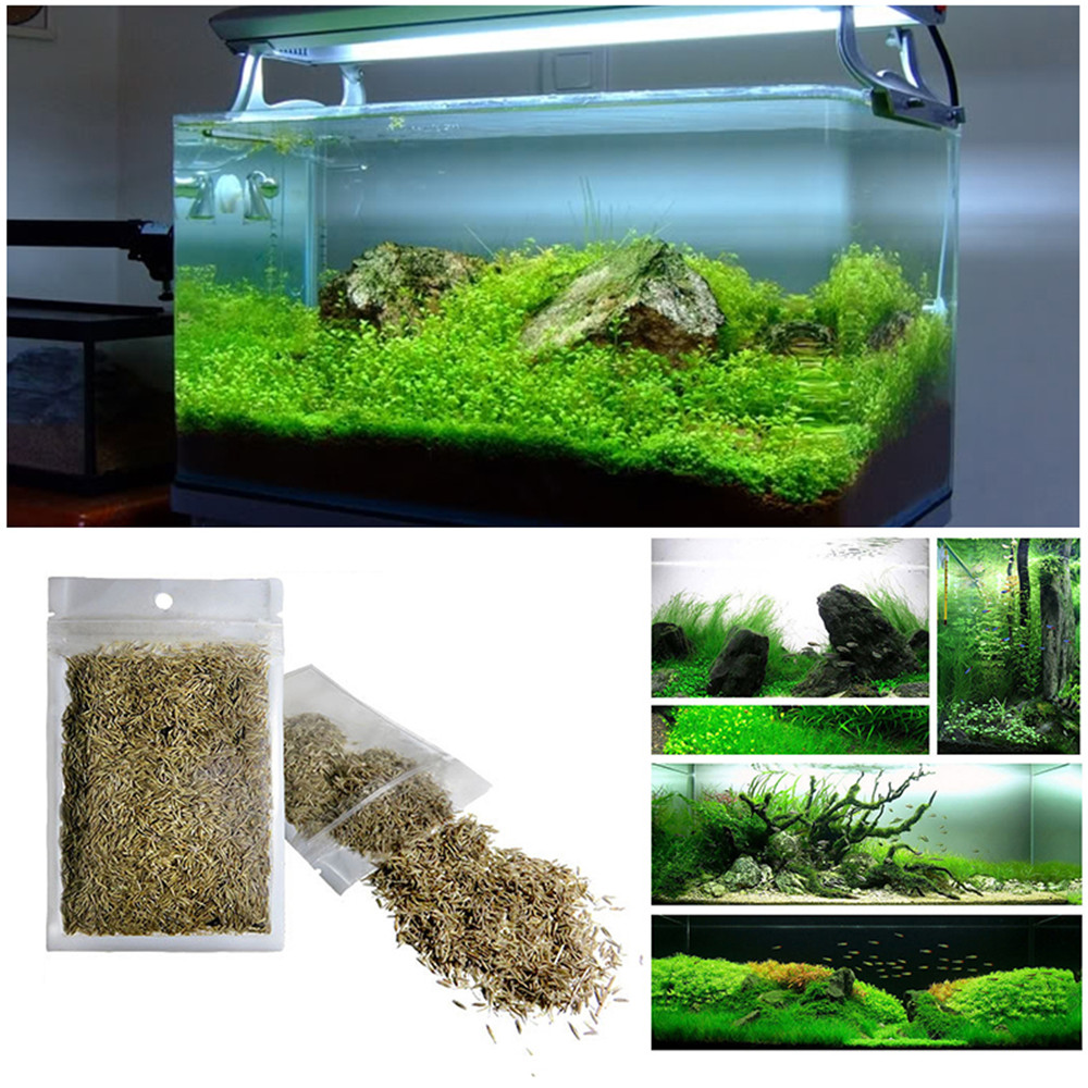 Verde del acuario c sped semillas de plantas acu ticas de for Peceras para jardin