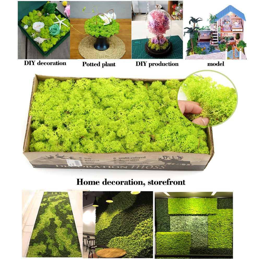 500g Natural Norwegian Reindeer Moss Preserved Dried Dried Craft Flowerfor Flowers Grass Plant Home Garden Garland Wedding Party