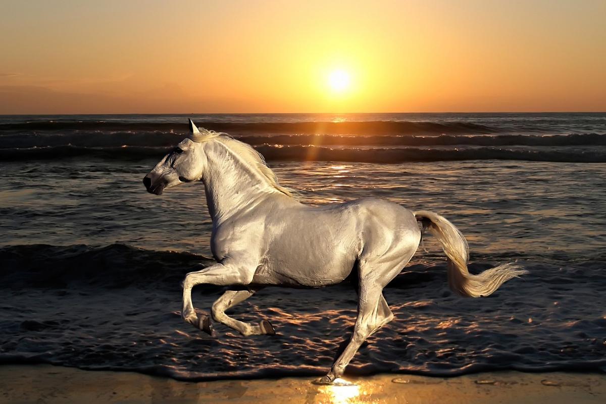 animals running horse sea shore evening sunset living room decor home wall modern art decor wood frame fabric posters MC816