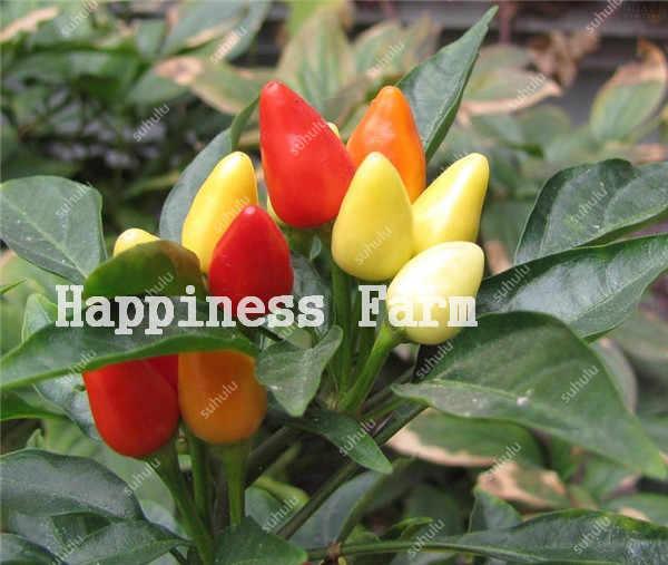 משלוח חינם 200 Pcs צ 'ילי פלפל ירקות מתוק פעמון חם פלפל בונסאי צ' ילי ירקות פפריקה צמח לבית גן פרח