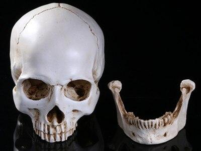 1:1 resin human musculoskeletal anatomy skull model for painting  skull art free shopping1:1 resin human musculoskeletal anatomy skull model for painting  skull art free shopping