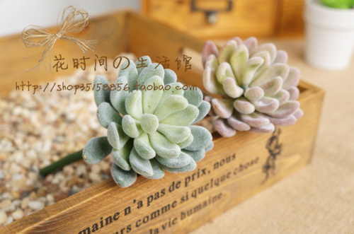 (6 ცალი / ლოტი) Succulents - დღესასწაულები და წვეულება - ფოტო 2
