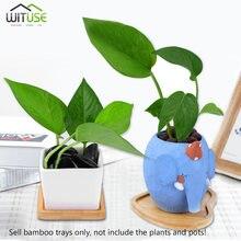 6 Pc Bambou Maison Mini Monde Décoration De Jardin Pot Plateaux Miniature  Figurines Pot Plaque DIY Accessoires Ornements