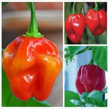 20+ Red Savina Hot Pepper Seeds~vegetable garden plant