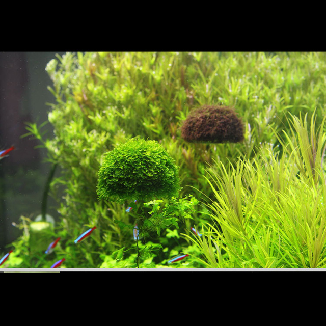 Buy floating plastic moss ball water for Plastic floating pond plants