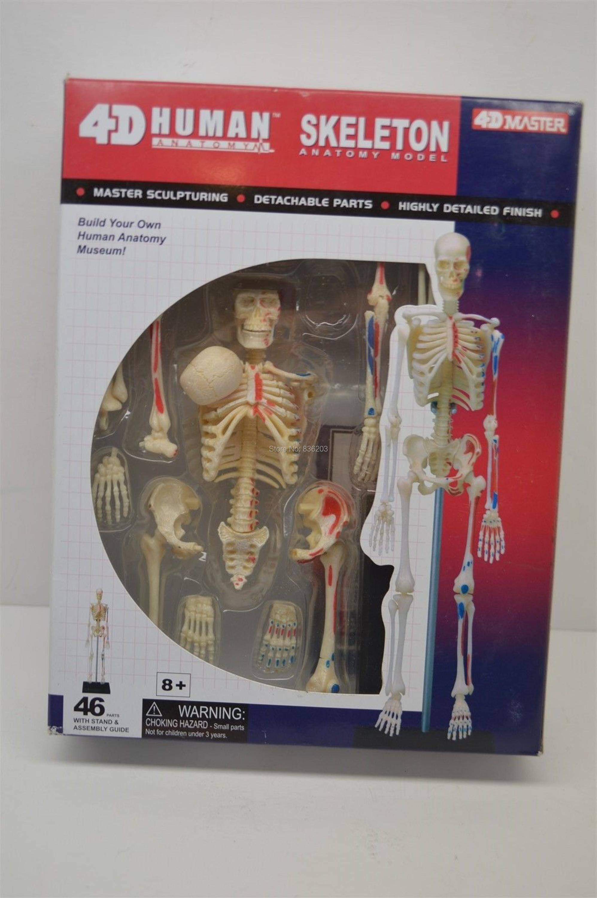 Online Shop 4D master 46 parts SKIN ANATOMY MODEL Anatomy medical ...
