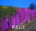Berro de roca, 100 Unids/pack Aubrieta Cascada Púrpura Semillas de Flores, excelente cubierta vegetal perenne para jardín de su casa