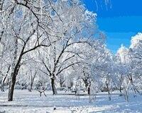 Mahuaf-i166สีขาวต้นไม้หิมะl anscape diyภาพสีน้ำมันbyตัวเลขศิลปะภาพวาดบนผืนผ้าใบที่มีสีอะคริลิสำหรับห้อ...