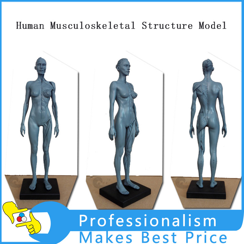 30cm Height Human Anatomical Anatomy Skull Head Body Model Muscle Bone Art Mannequin Musculoskeletal Anatomical Model Structure книги эксмо изучаю мир вокруг для детей 6 7 лет page 3