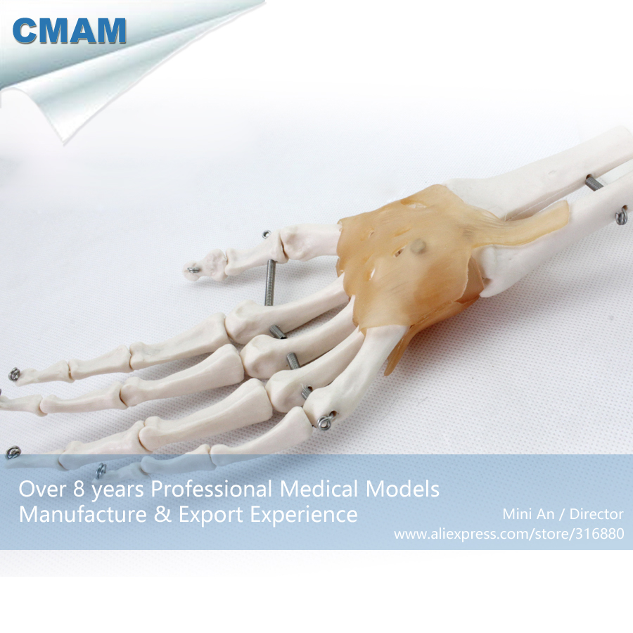 CMAM-JOINT04 Life-Size Hand Joint with Ligaments,  Medical Science Educational Teaching Anatomical Models cmam urology04 life size human anatomical skeleton female urogenital medical science educational teaching anatomical models