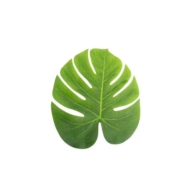 Simulation feuille pour hawa enne artificielle feuilles de - Feuille de palmier artificielle ...