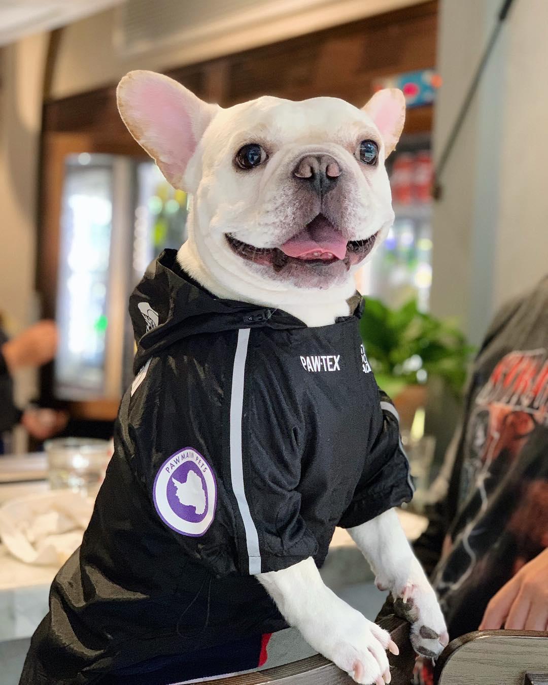 Dog Clothes Adidog French Bulldog Pupreme Shirt Dog Windbreaker Sport Retro Dog Hoodies Pet Clothes Ropa Perro Puppy Dog Pugs